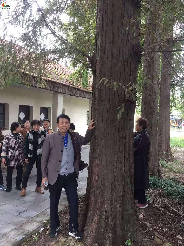 生态园水杉林与知识青年