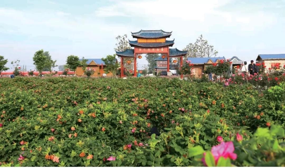 七律 • 游射阳湖玫瑰园