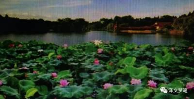 """宝应是闻名遐迩的""""荷藕之乡"""""""